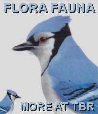 FLORA & FAUNA STAMPS